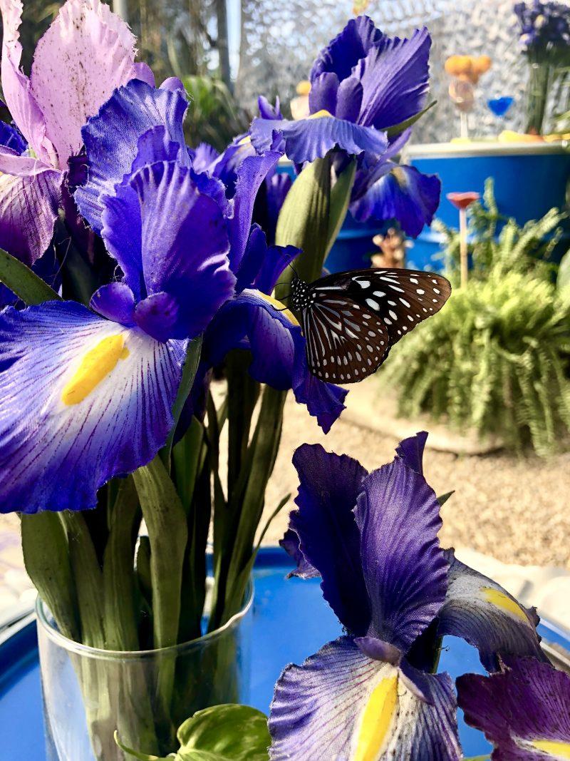 Farfalla fiore viola